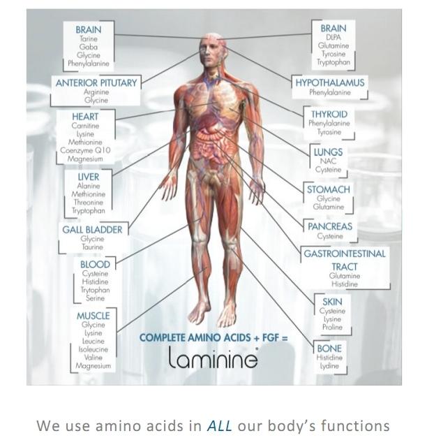 laminine benefits